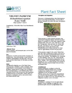 Velvet Panicum Plant Fact Sheet